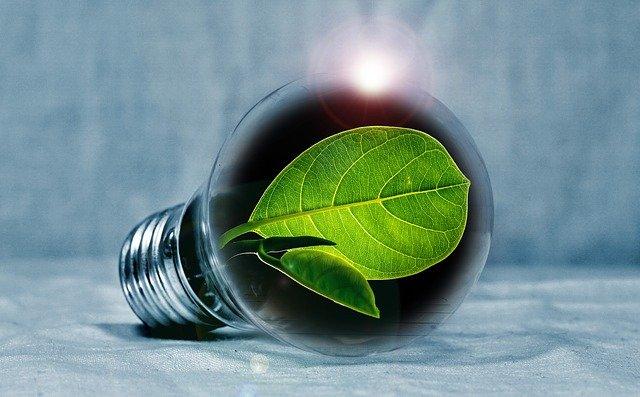 żarówka z zielonym liściem w środku jako symbol oszczędzanie energii